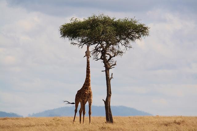 La faune du Kenya